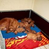 Coco et ses bébés 2