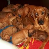 Coco et ses bébés
